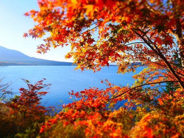 從展望台看紅葉