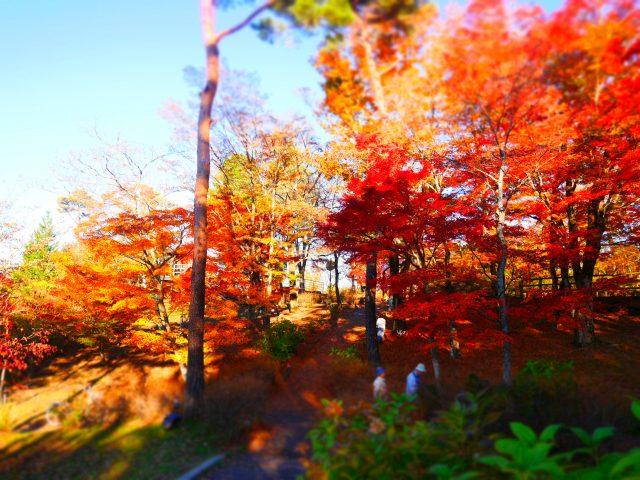 山中湖地區的紅葉