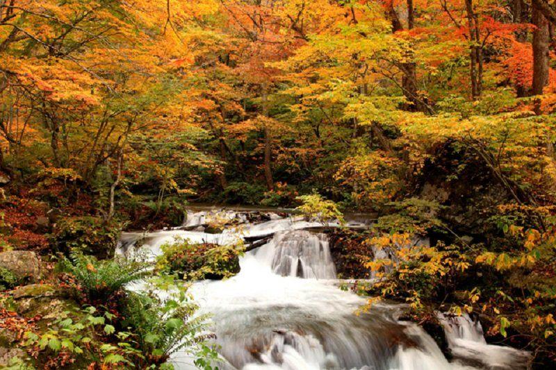 青森縣 奧入瀨溪流的紅葉