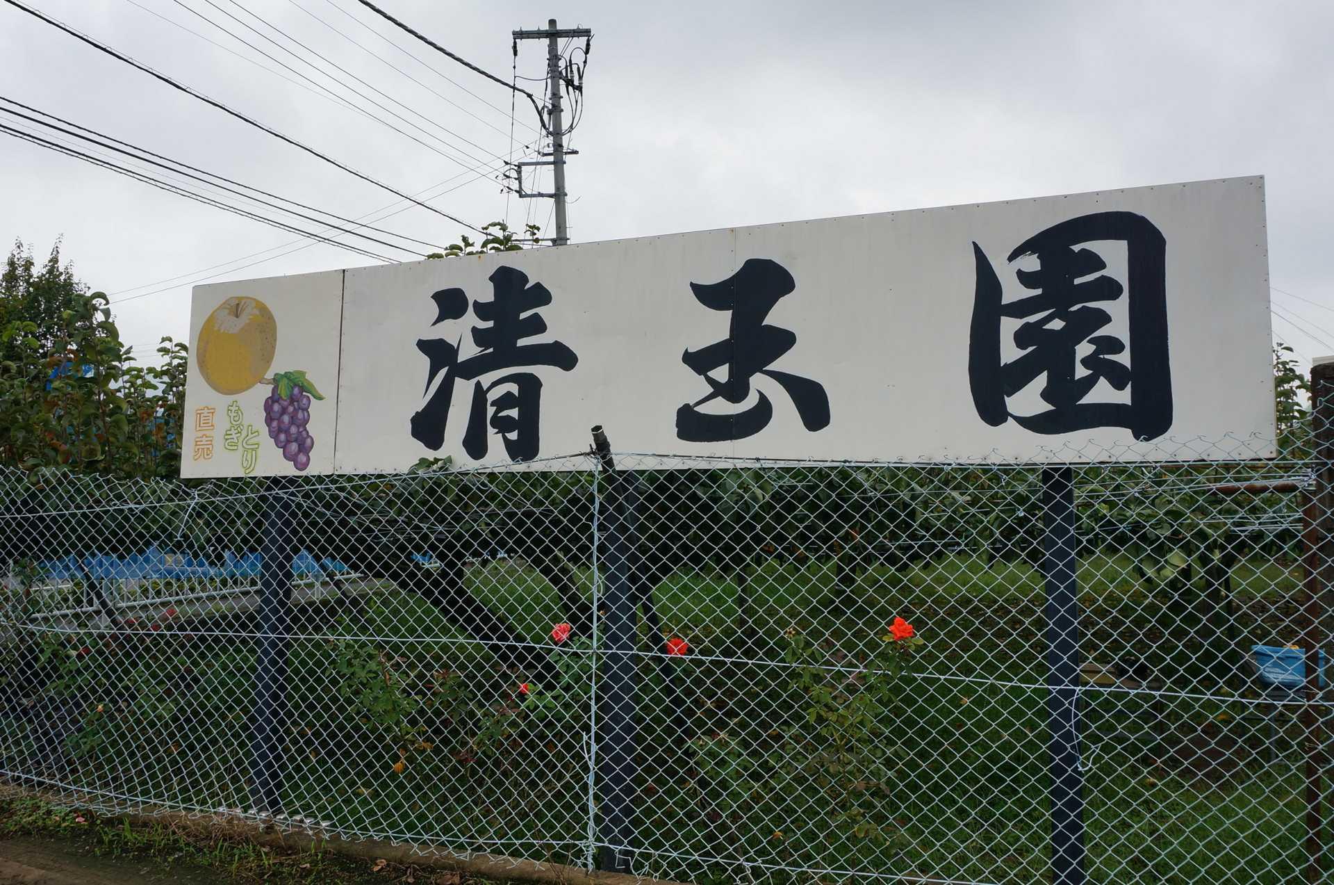 稻城市 清玉园梨园