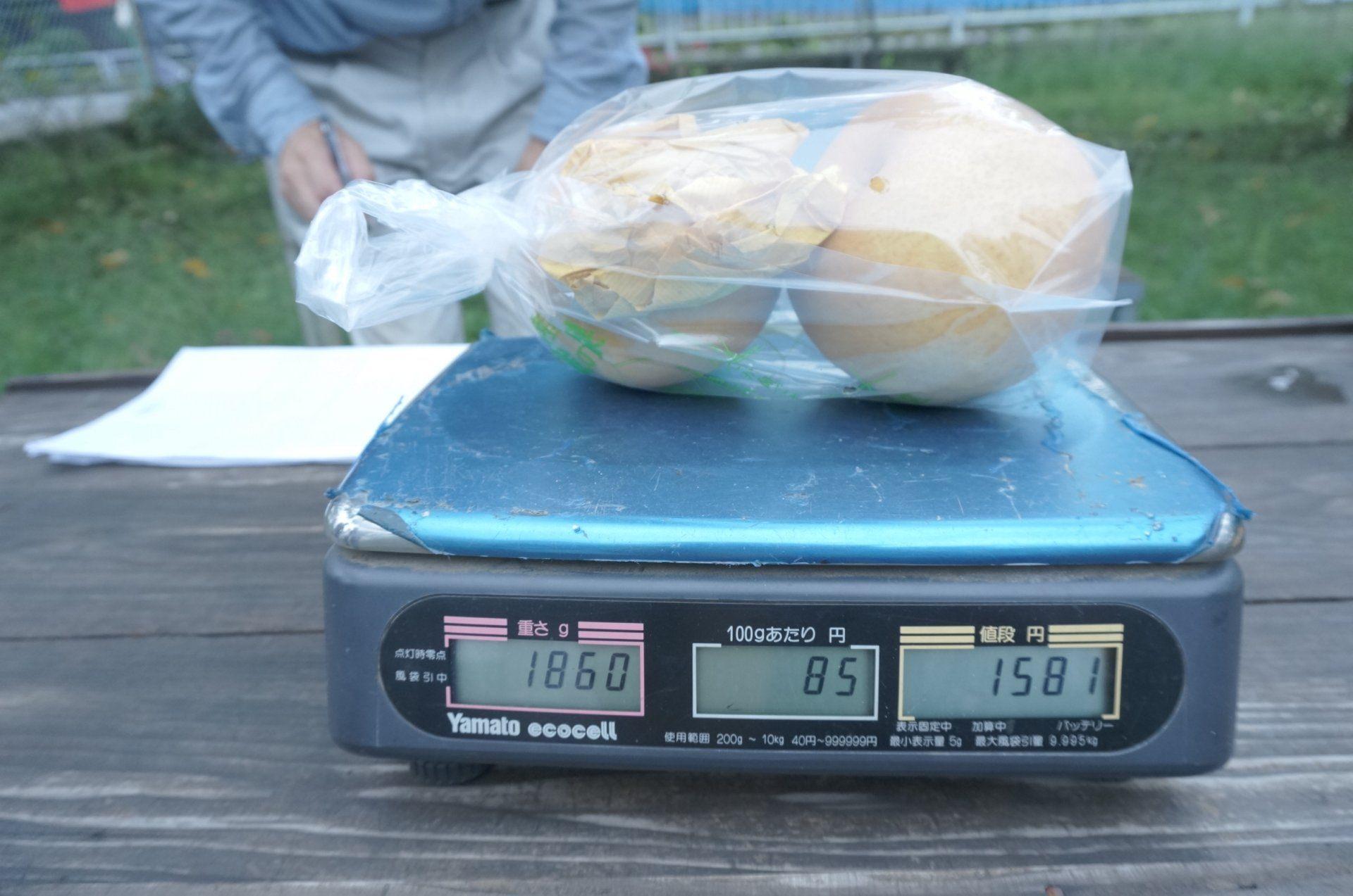 新高梨 平均1个约900g重