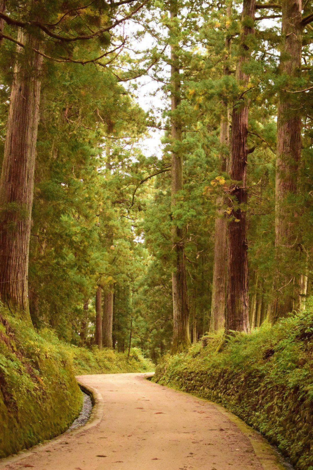 吉尼斯世界纪录 世界最长的并木道