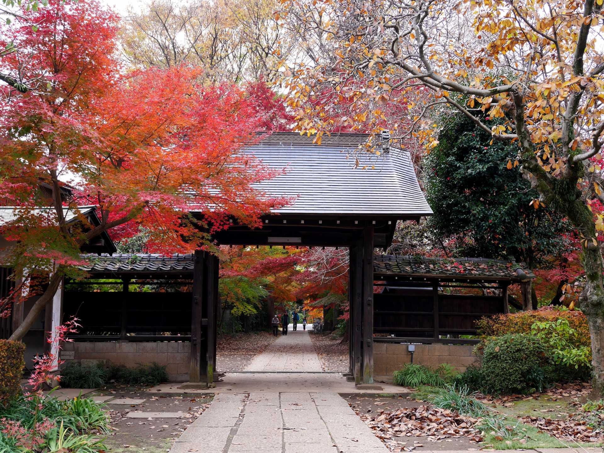 興禪院 紅葉