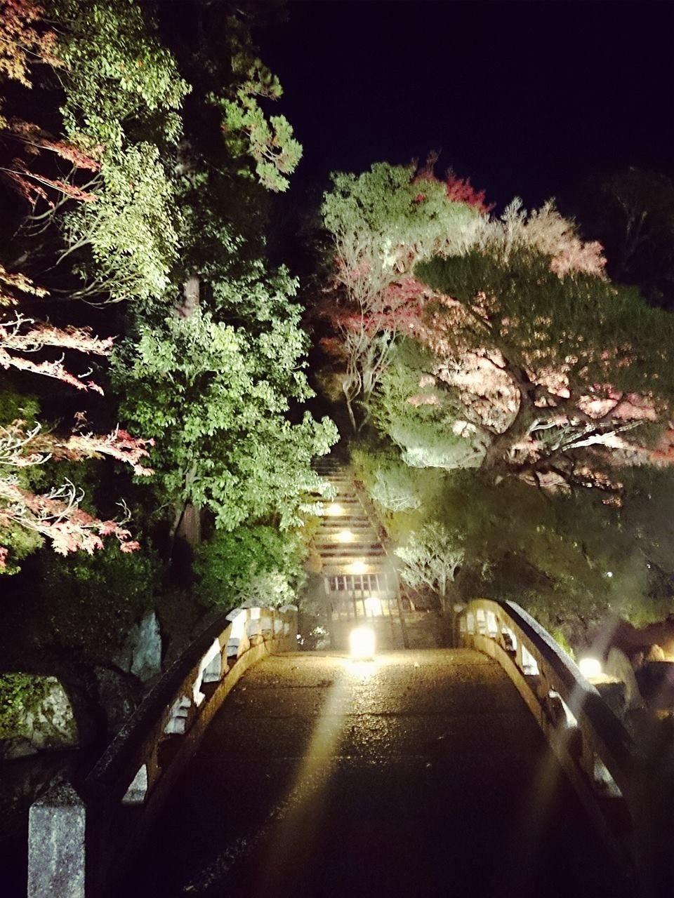 友禪苑夜楓