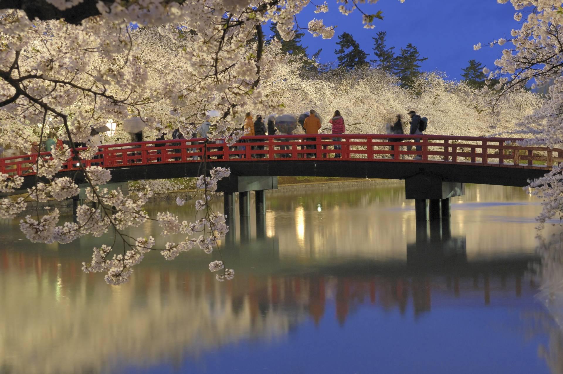 Hirosaki Park, Spring view of cherry blossoms