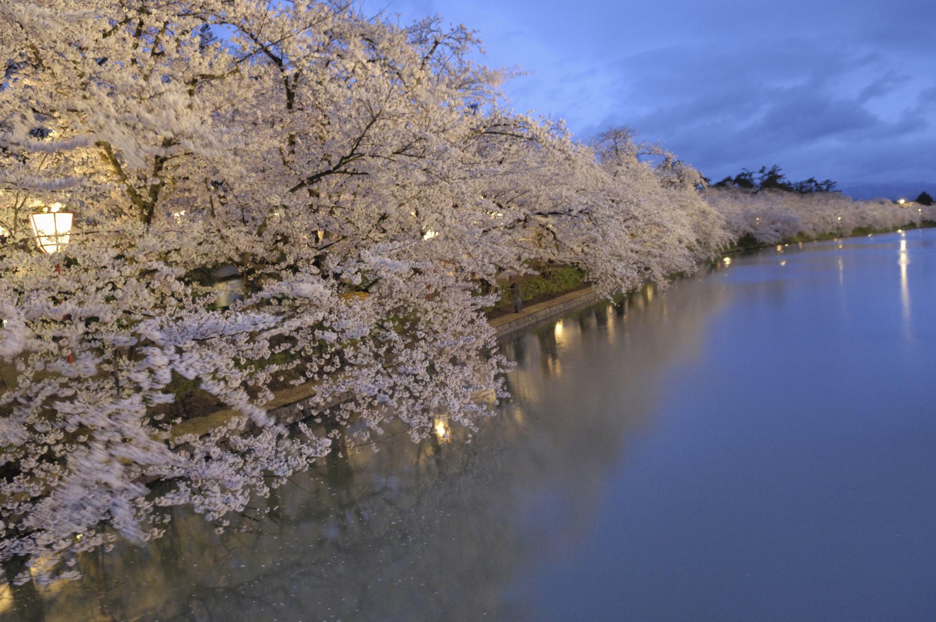 弘前公園、春、櫻花、護城河