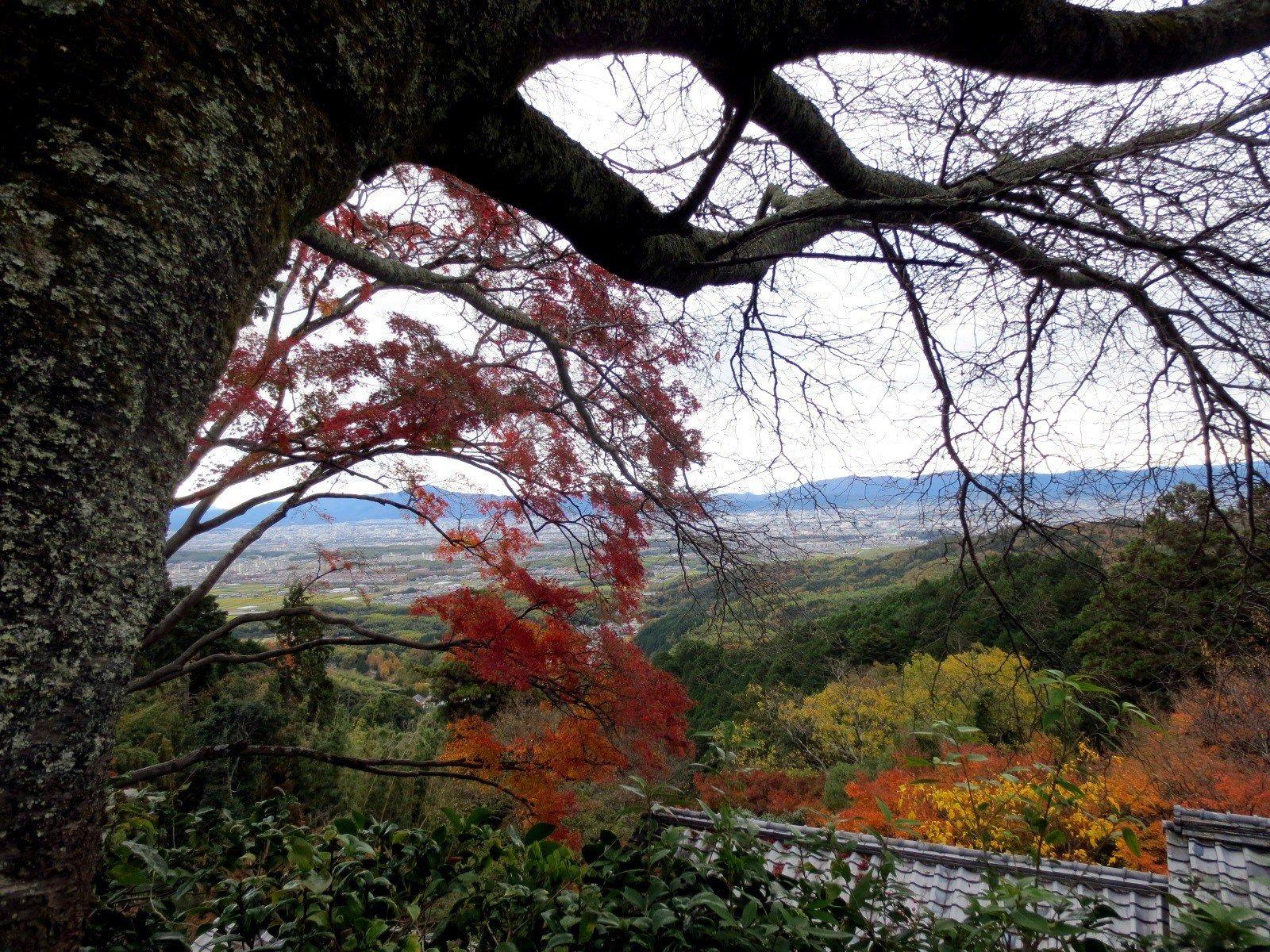 京都市街第一的景色