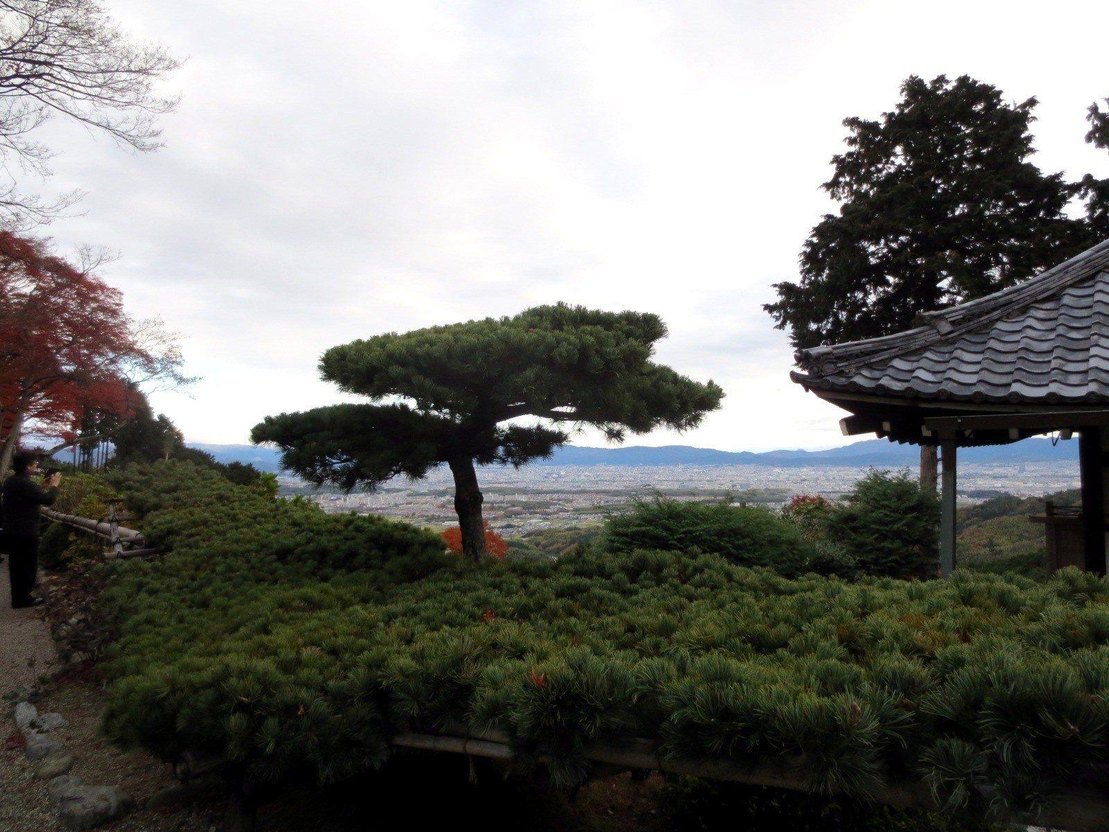和游龙之松一起的京都街景