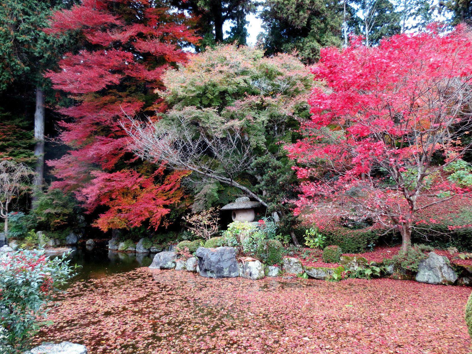 青莲瀑布 池塘里满是红叶