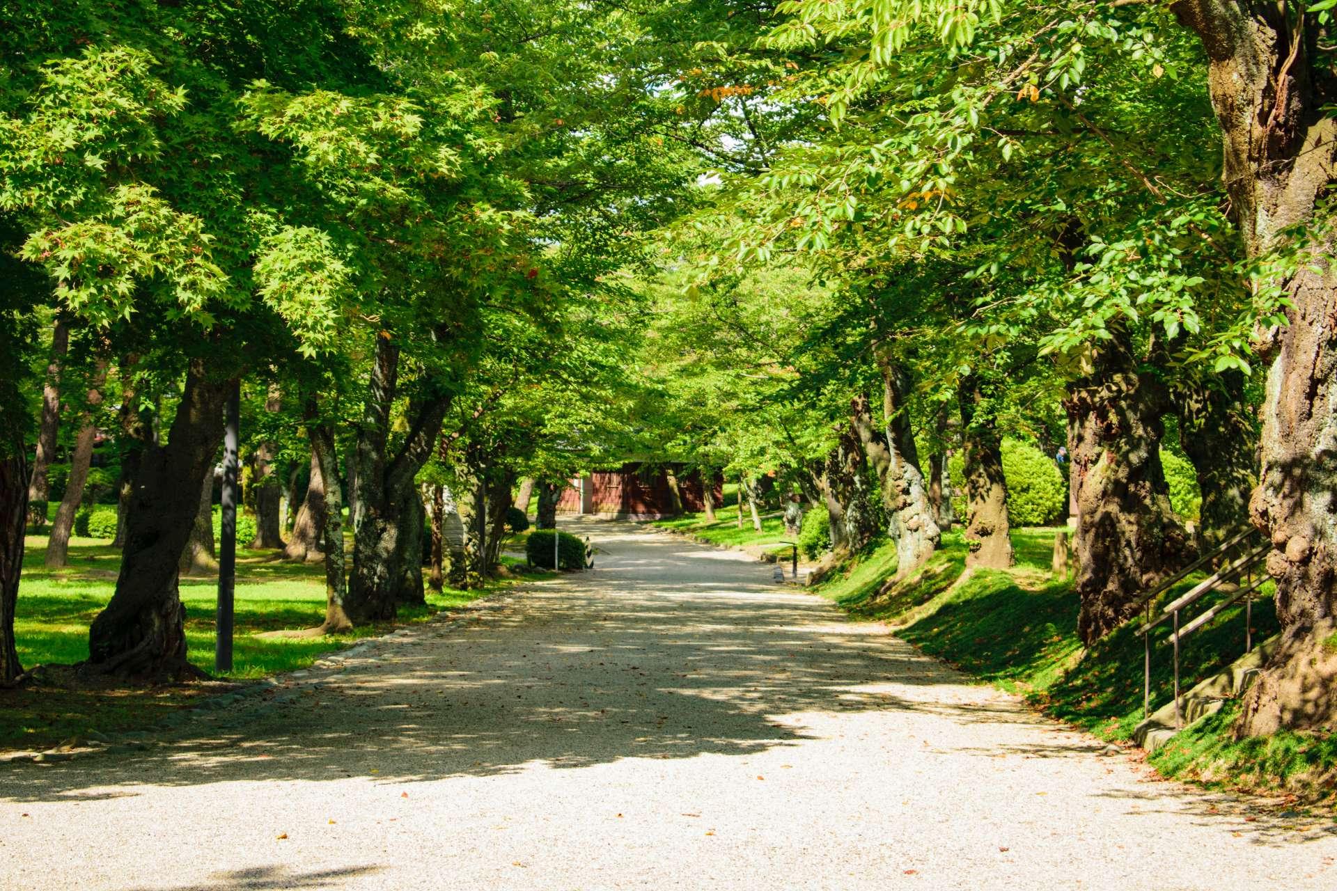 千秋公园、古城旧址、新绿、散步、公园、秋田藩、文化遗产、名胜