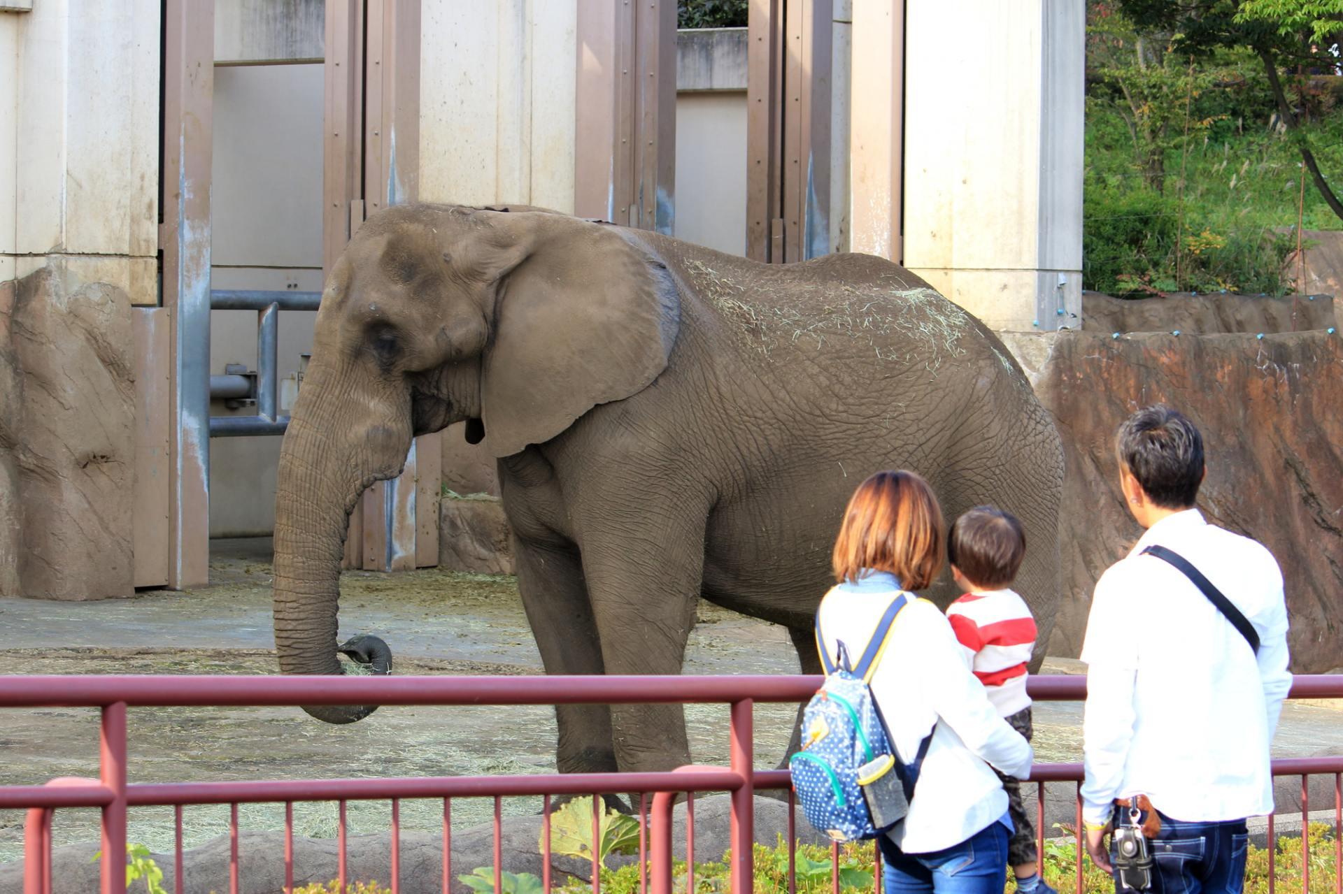 盛冈市动物公园、动物、岩手县、家庭、野餐郊游、活动