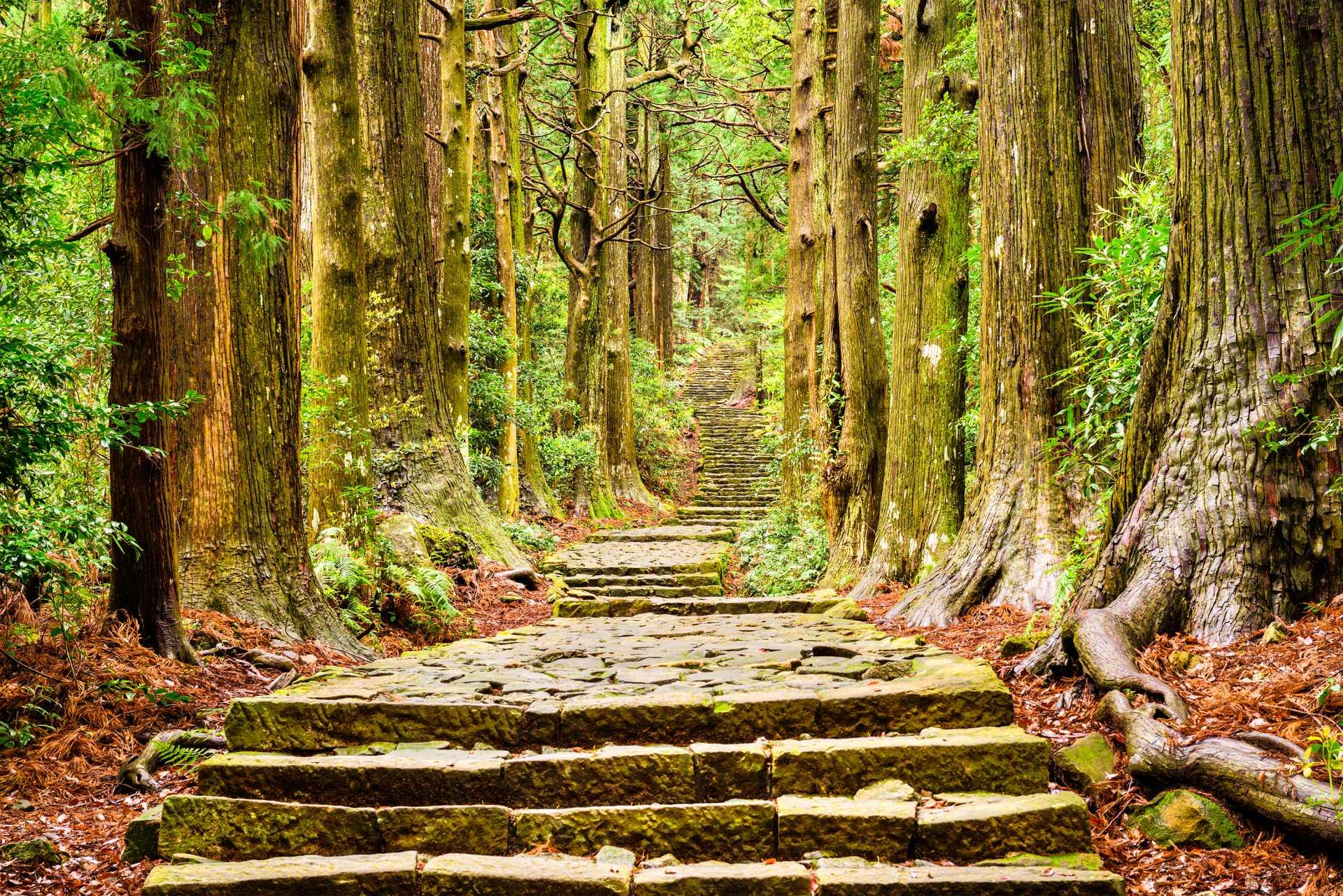 熊野古道、大门坂、世界遗产、石阶、那智山、圣地