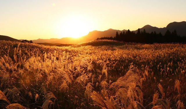 秘境【曽尔高原】世界级VIP也想造访的日本第一夕阳美景! ?