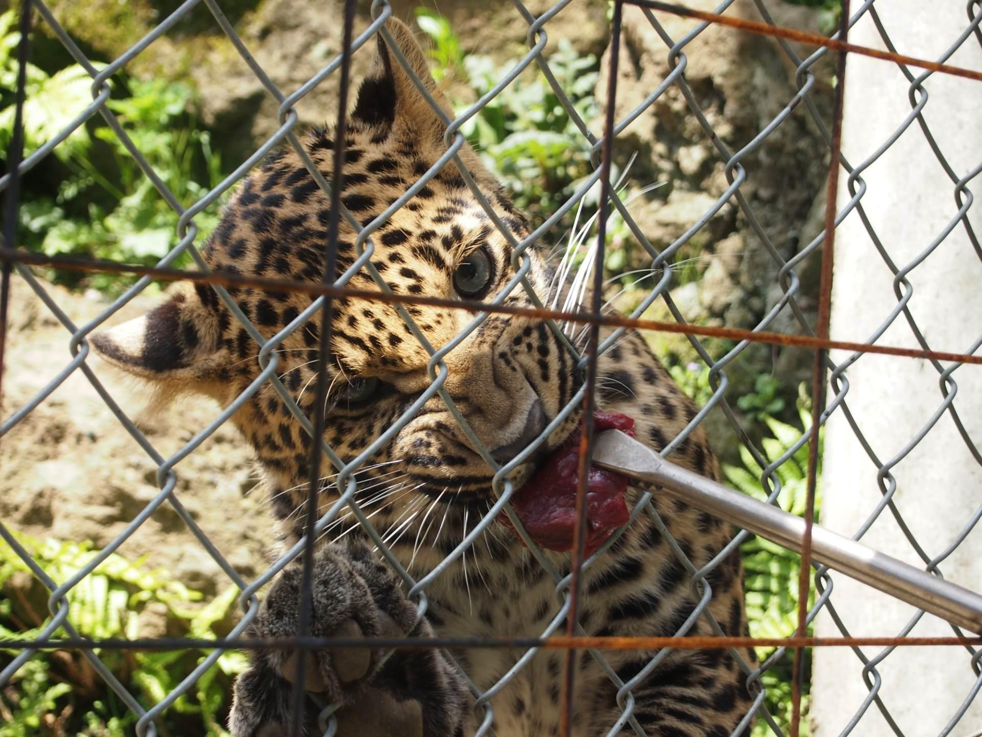 富士野生動物園、餵飼