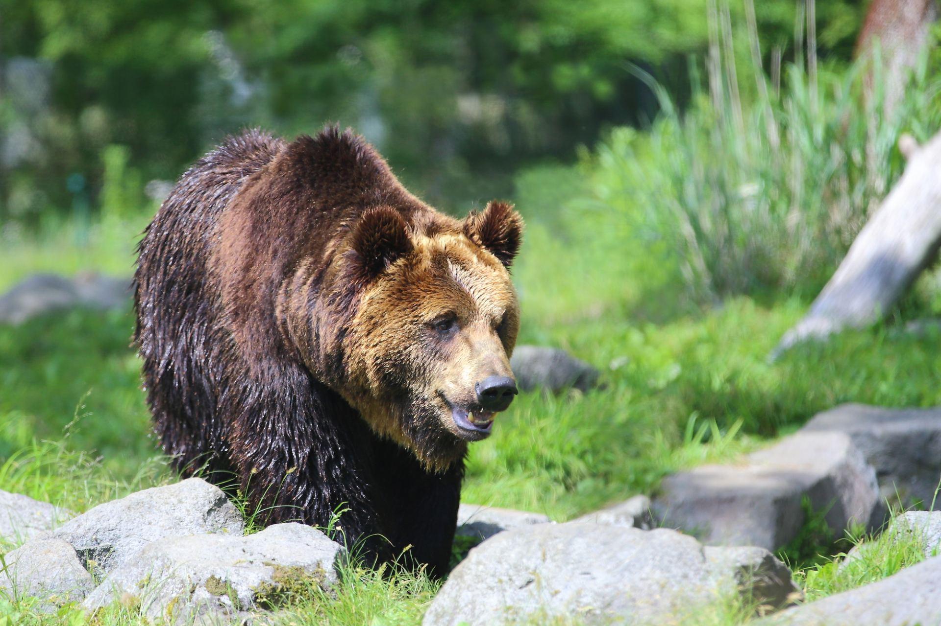 富士野生動物園、熊