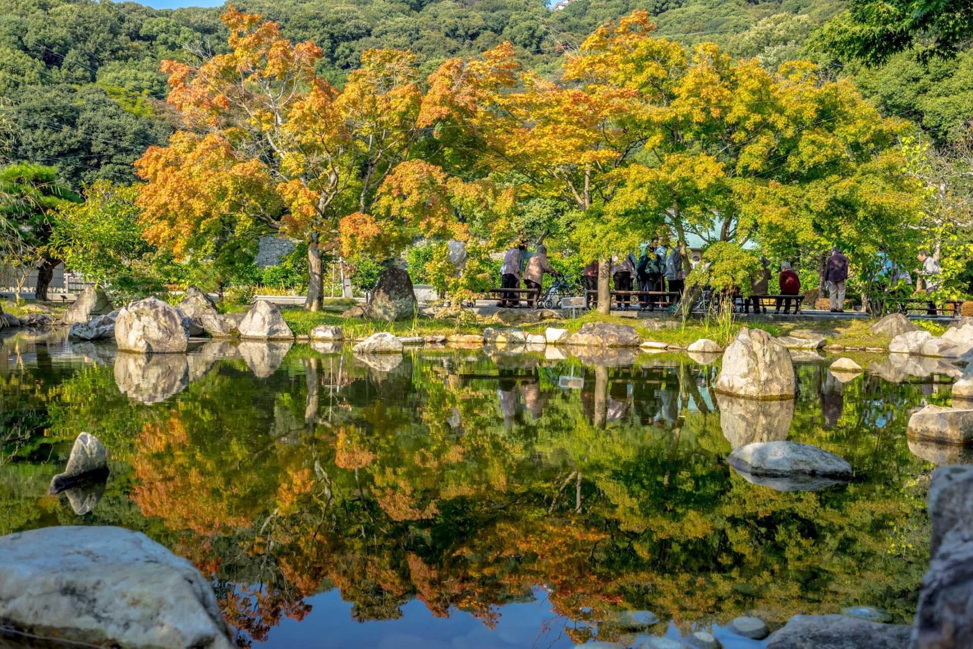少许的枫树倒映在池塘清澈的水中
