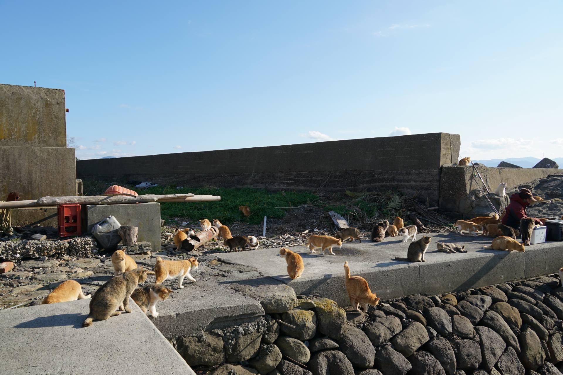 青島港口許多貓咪來迎接旅客