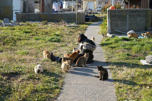 Cat Paradise in Aoshima, Ehime Prefecture ♡