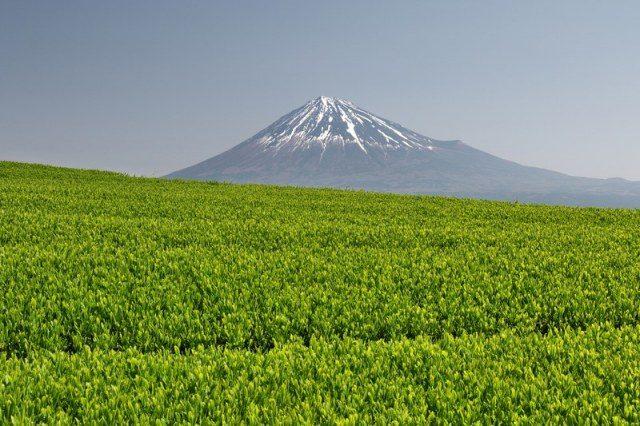 以茶的原產地聞名的靜岡縣