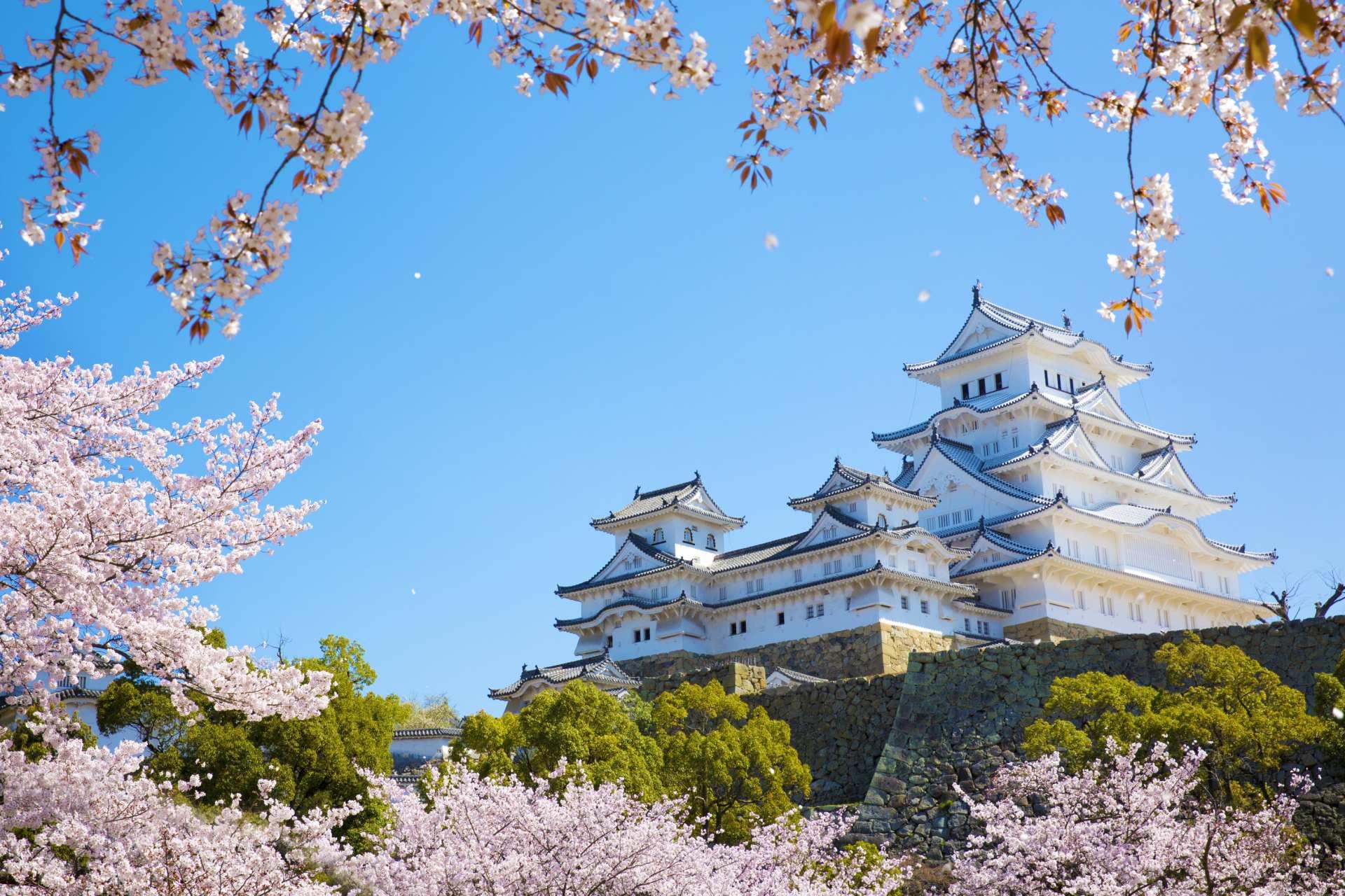 迎来樱花季的梦幻姬路城
