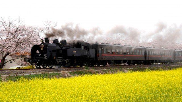 """""""主菜""""的「C11 325」型蒸汽火車登場!"""