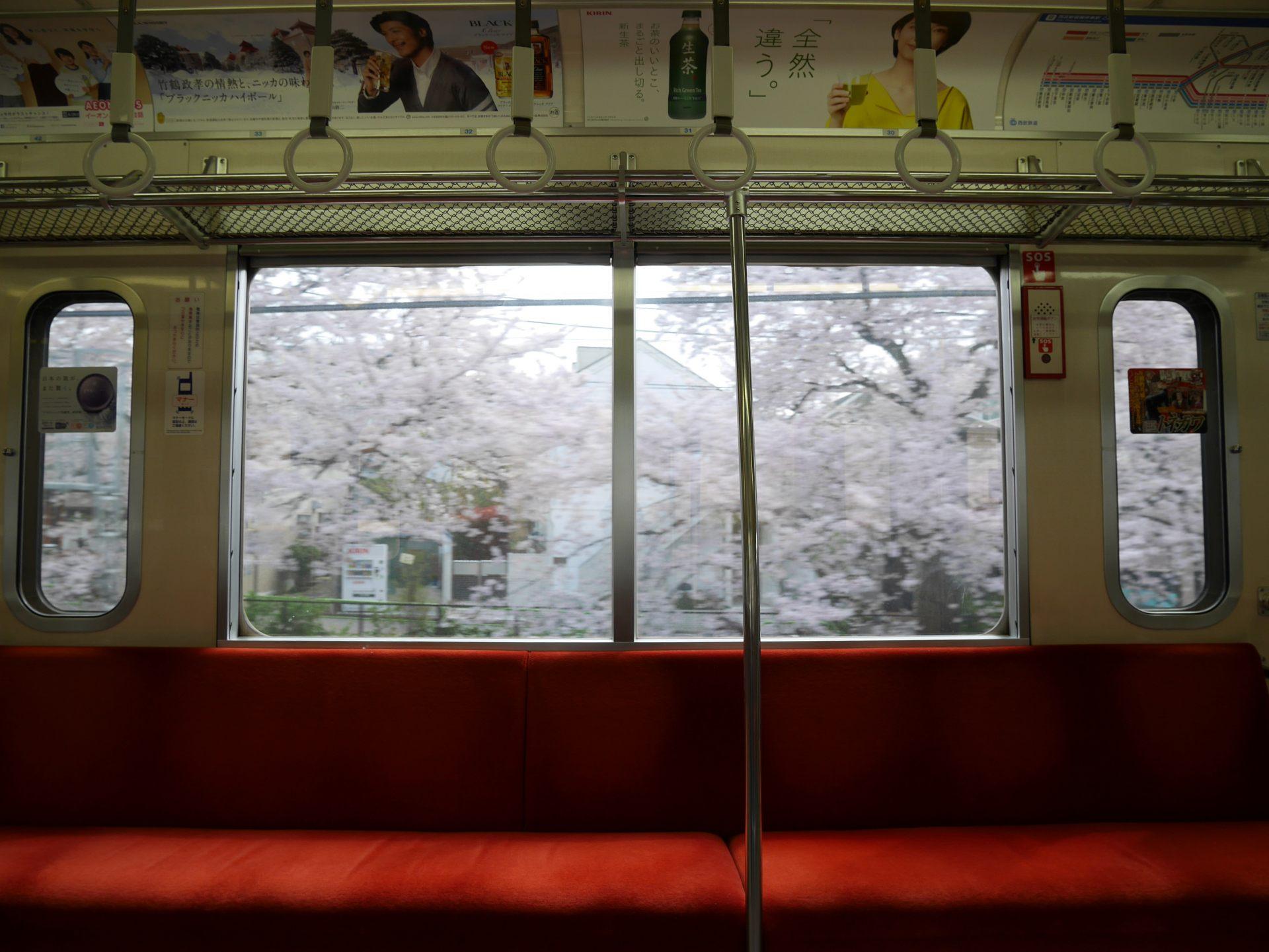 被櫻花蓋滿的武藏關・東伏見車站之間的列車車窗