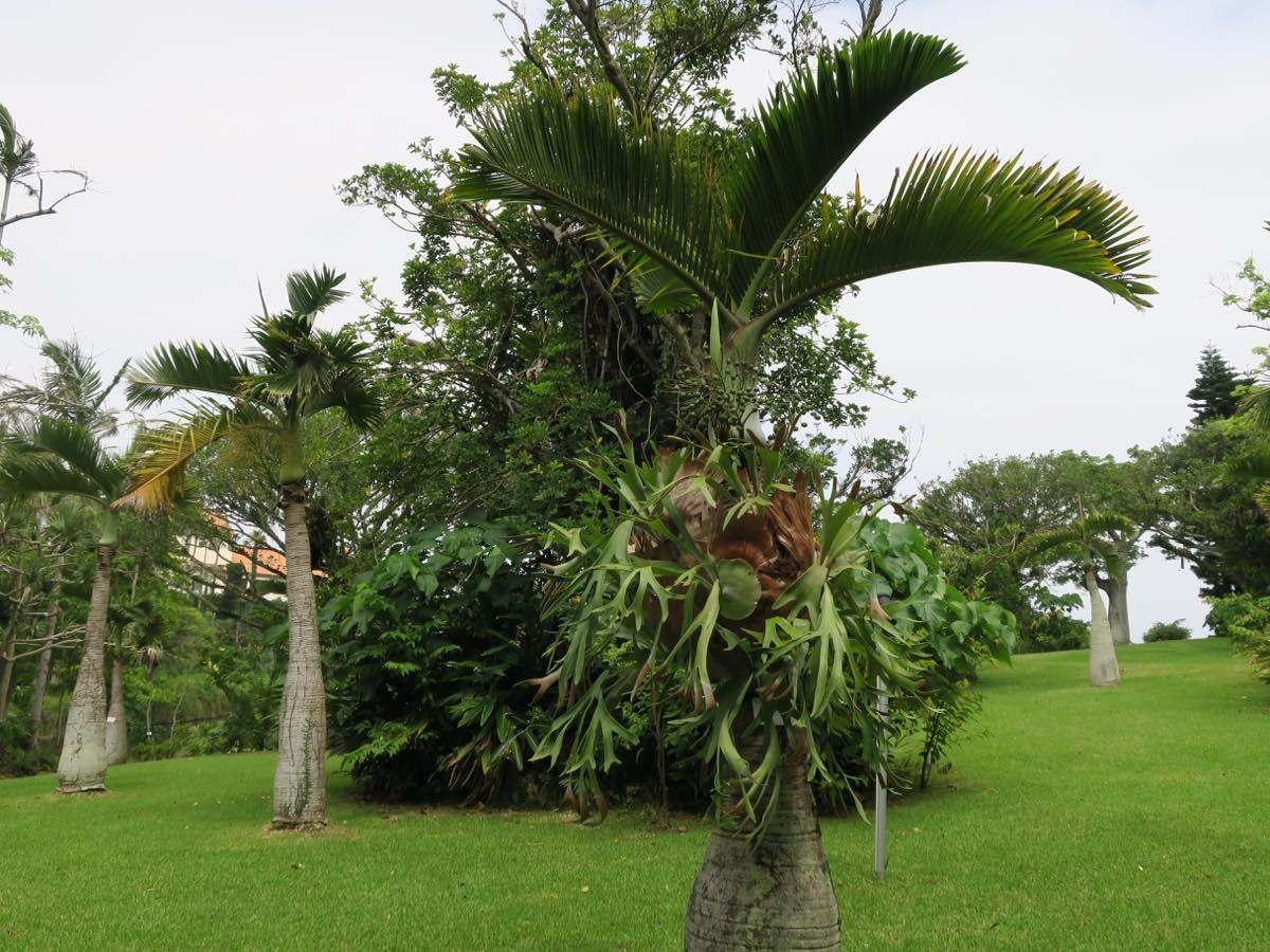 園內有許多珍貴稀有植物