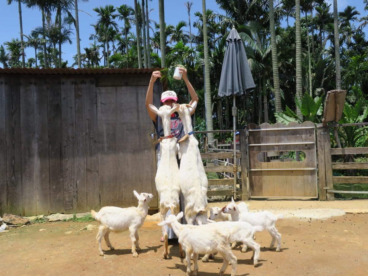 被大批羊群包圍