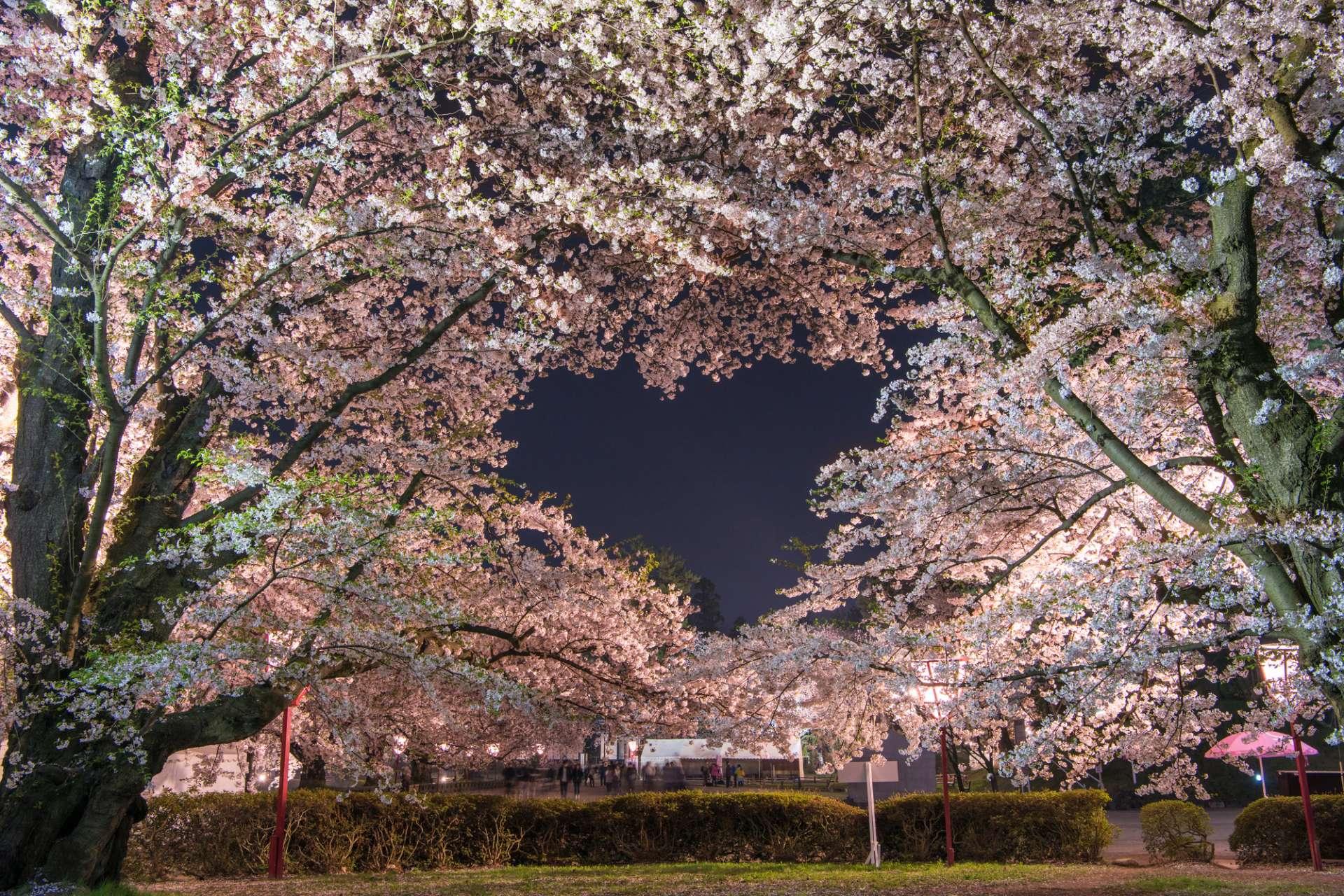 快来看爱心形状的樱花美景!请逐一寻找隐藏在公园的心形景点吧!