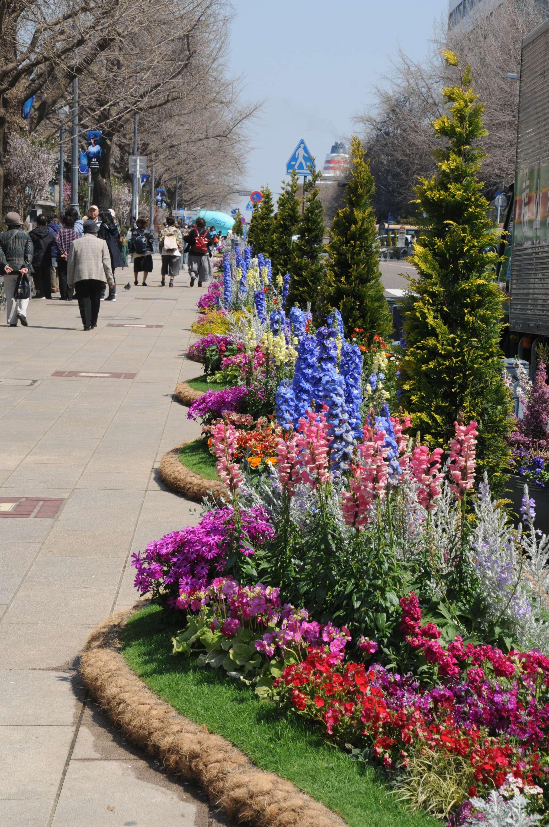 在全长约200公尺的日本大通可以欣赏到美丽的鲜花