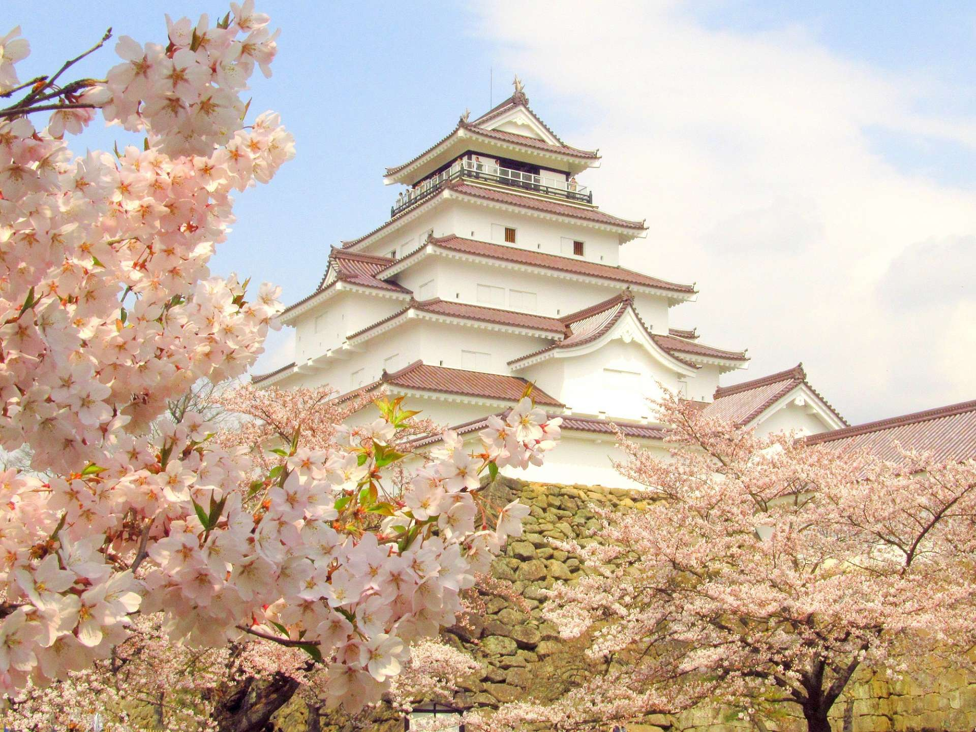 会津若松 鹤城与樱花