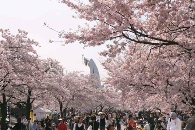 在大阪萬博紀念公園享受春天