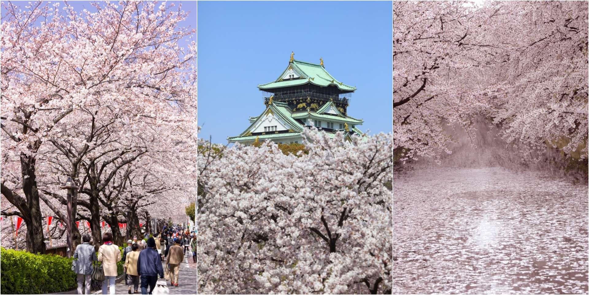 櫻花的照片