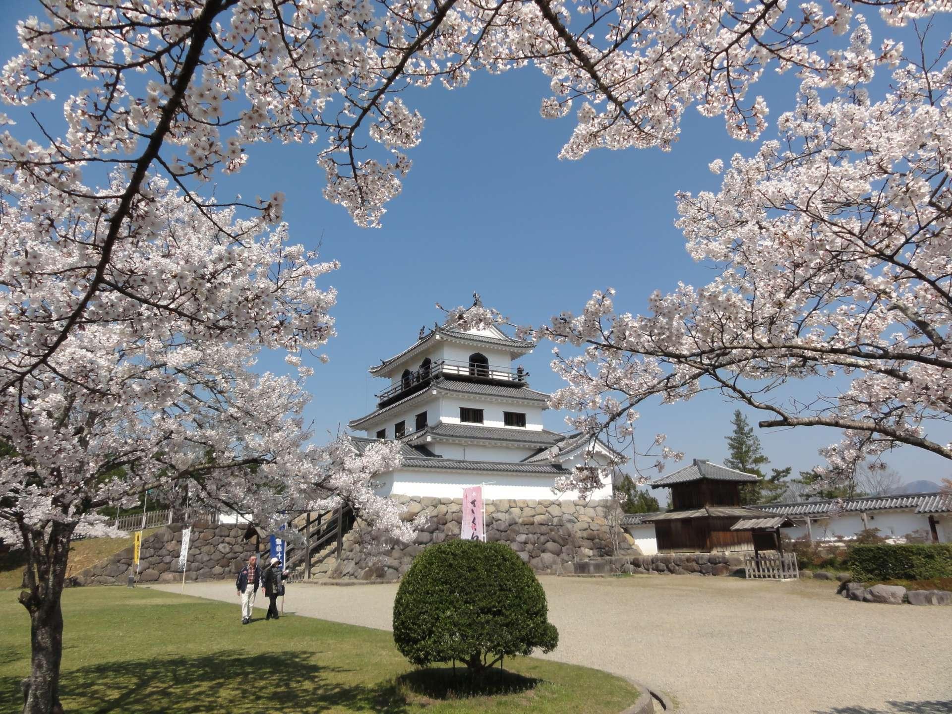 宫城赏樱:白石城(益冈公园)