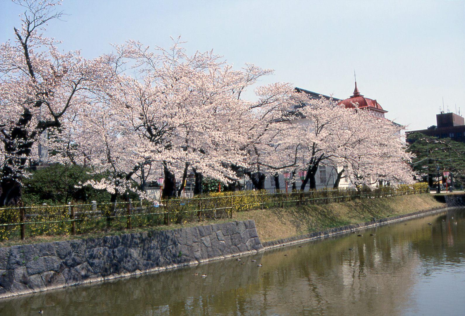 山形赏樱:鹤冈公园