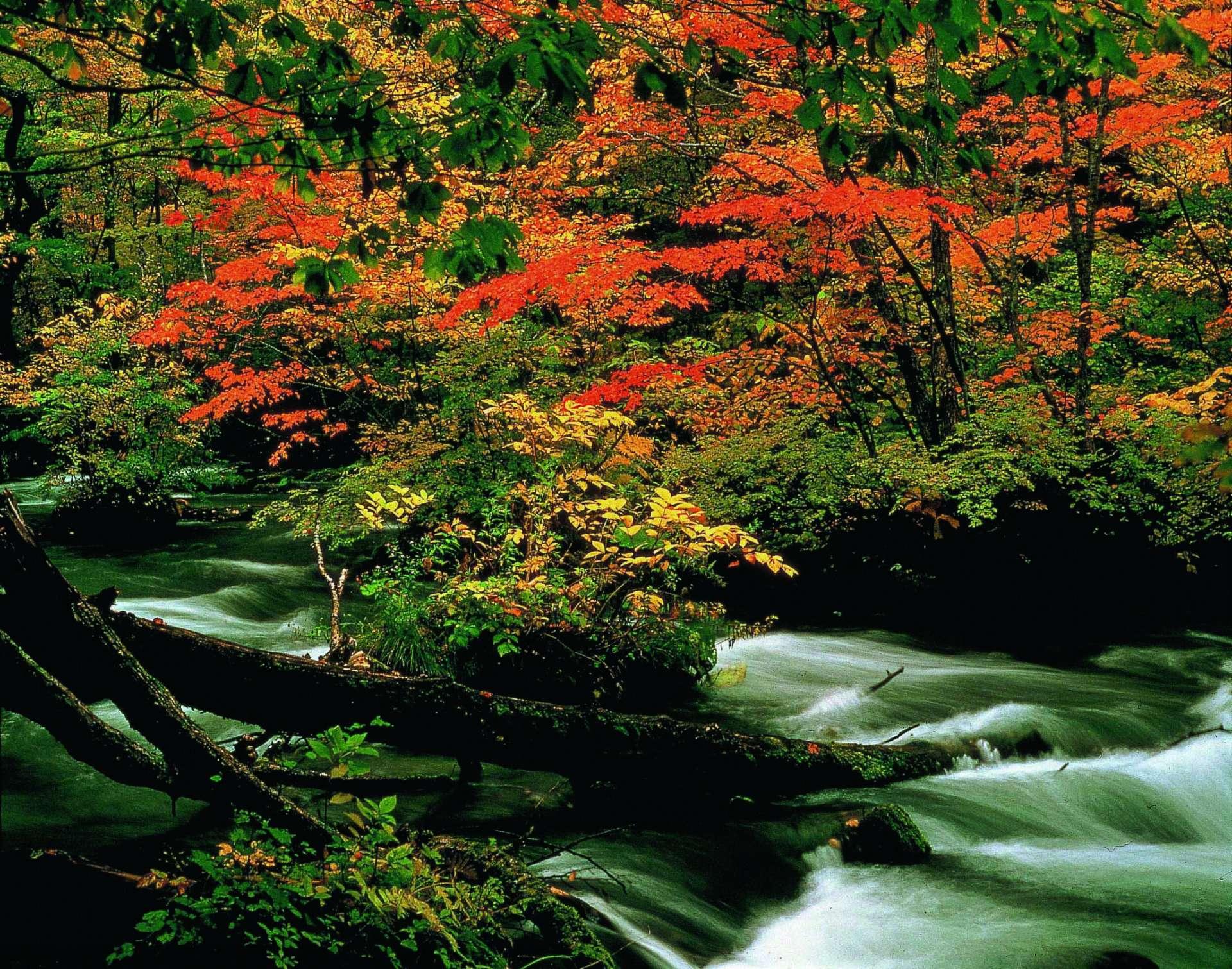 秋季的奧入瀨溪流