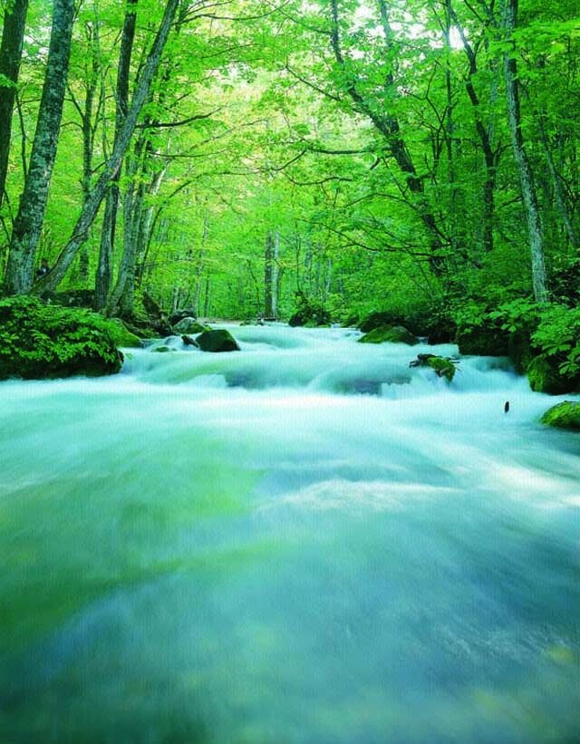Beech tree, mossy rock and serene, clear stream compose a picture of another world.