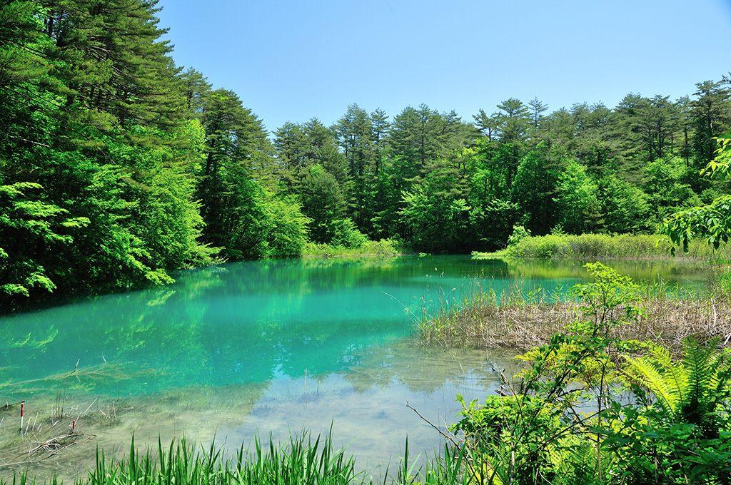 因磐梯山的噴發而誕生的美麗湖沼分散多處。