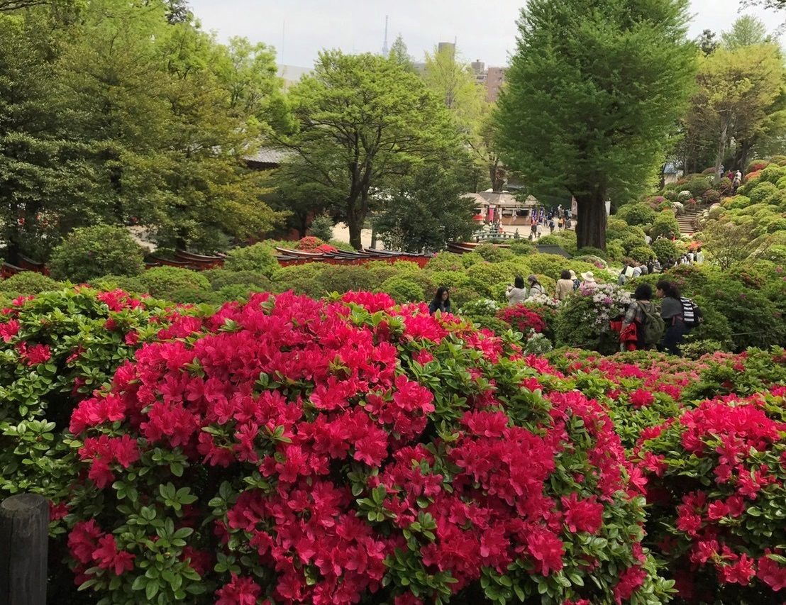 绿树红花与朦胧之中的晴空塔相映成趣