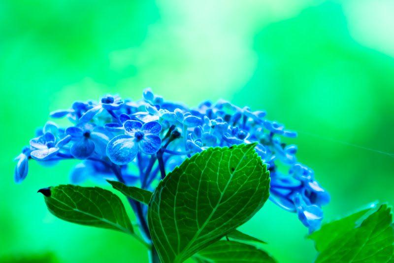 宝物殿·菖蒲池周边的鲜花