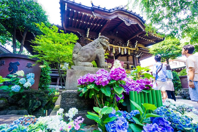 Hakusan Shrine's Grounds