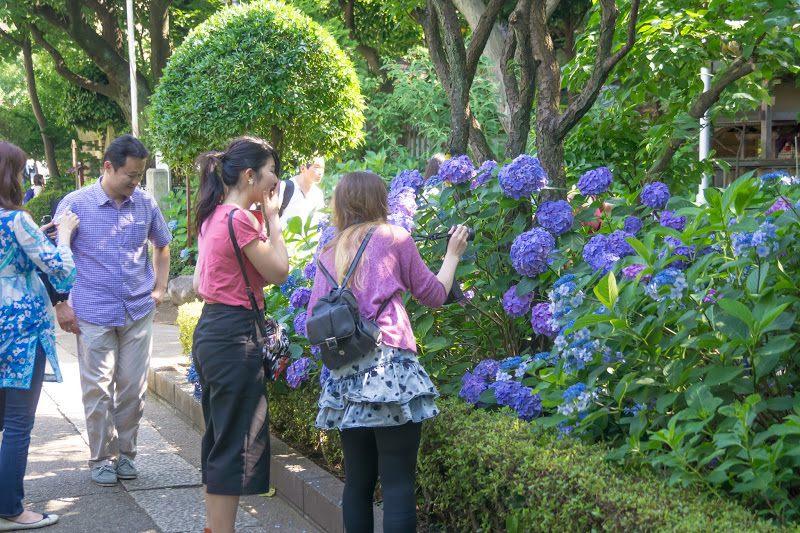 白山神社境內的賞花客