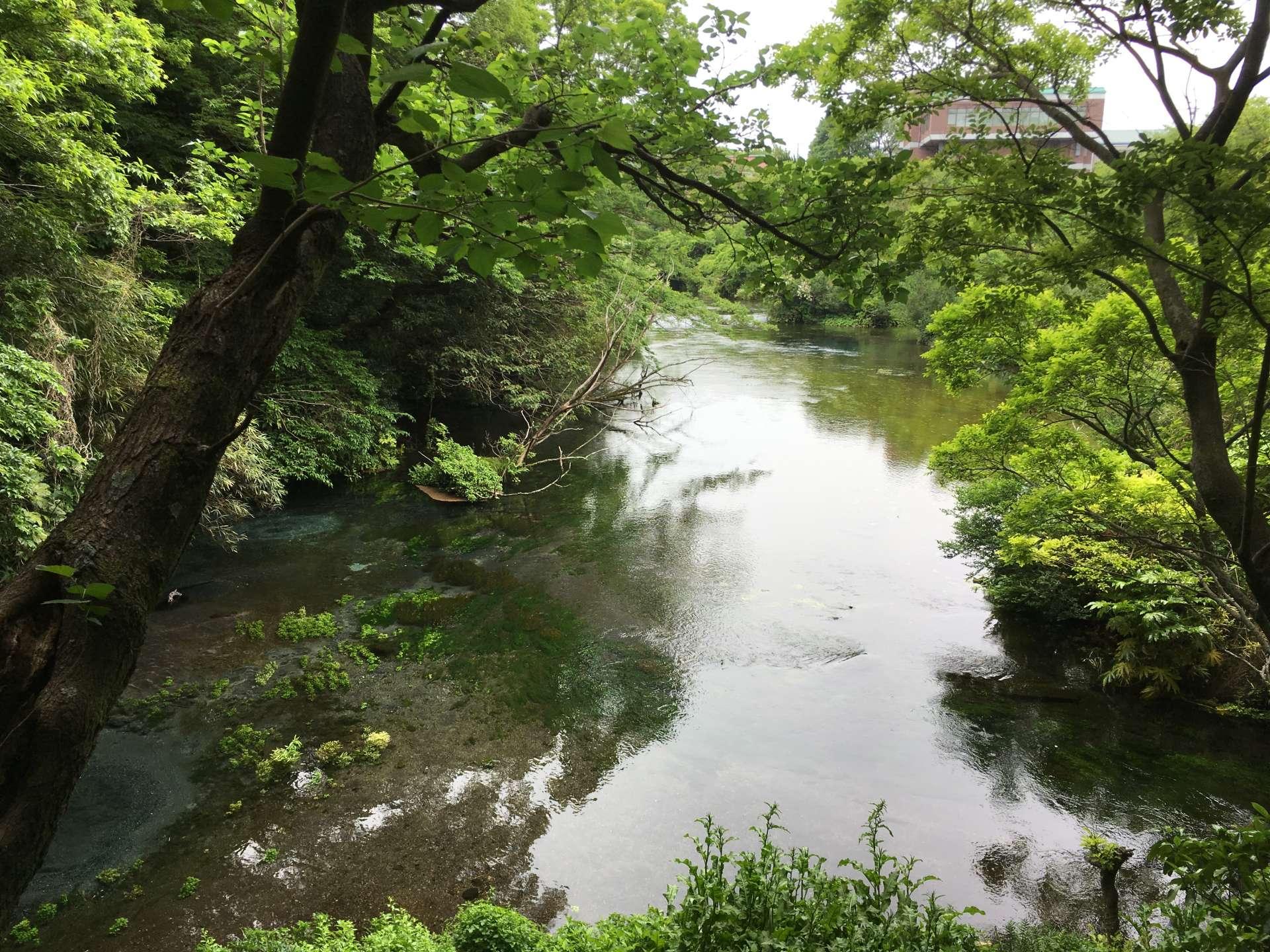 日本三大清流之一 柿田川