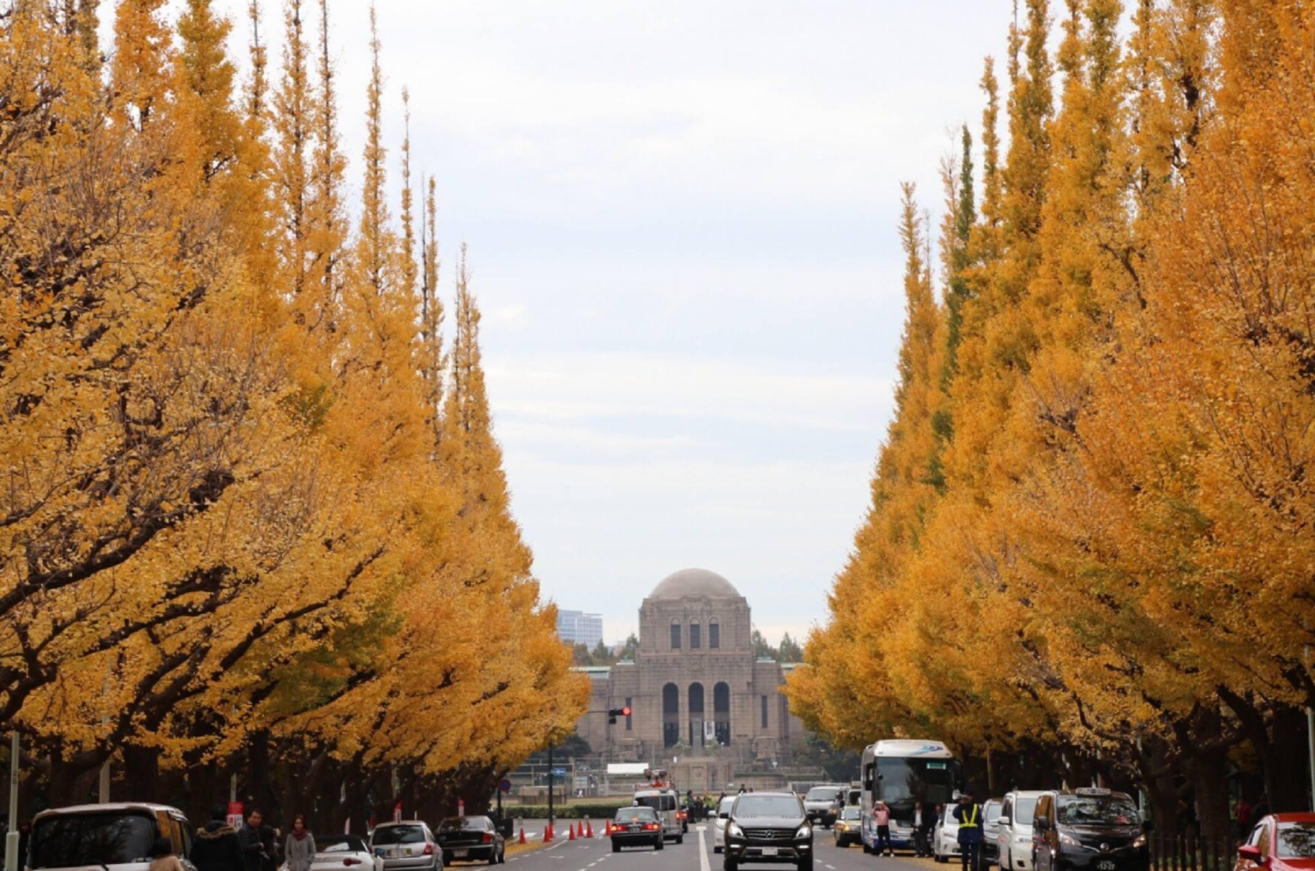明治神宫外苑 银杏并木