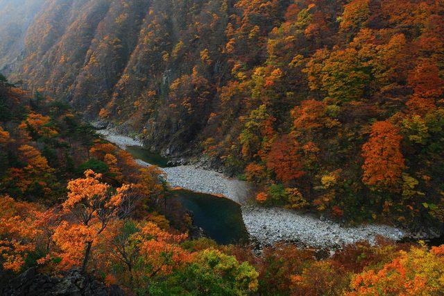 錦秋湖的紅葉,色彩鮮豔