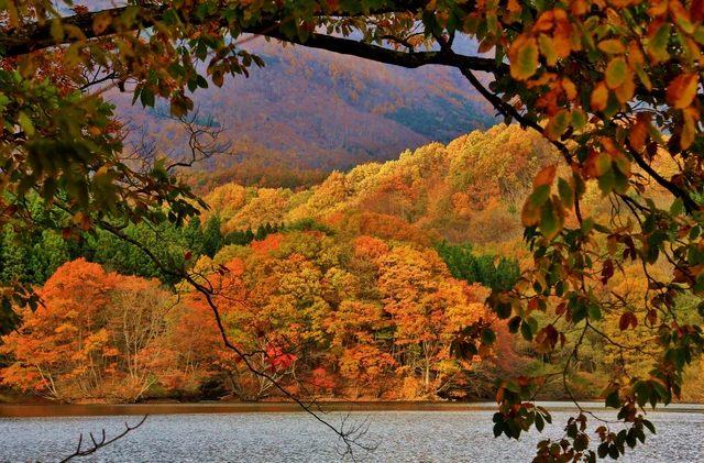 長老湖的紅葉