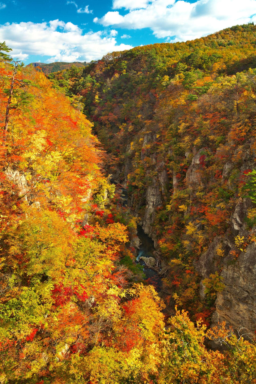 懸崖與楓葉交織而成的景觀在日本也很難看到