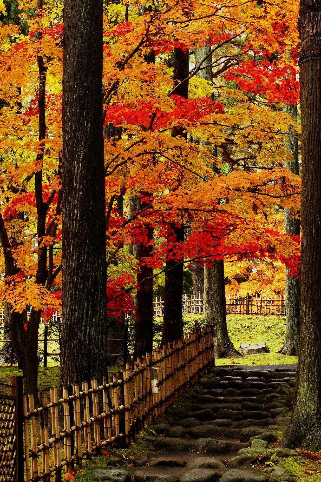紅葉並木小路