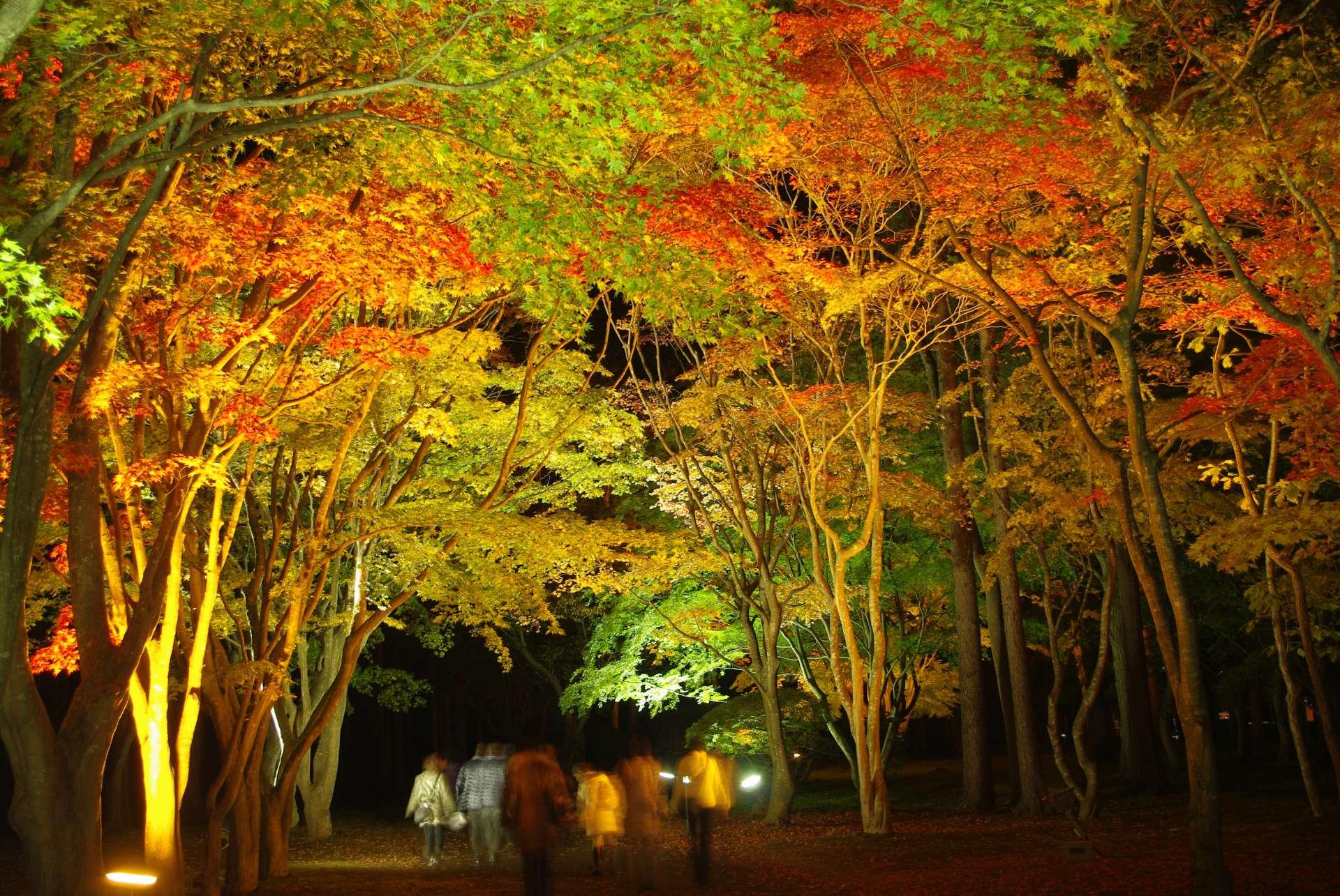 夜色下浪漫的紅葉點燈