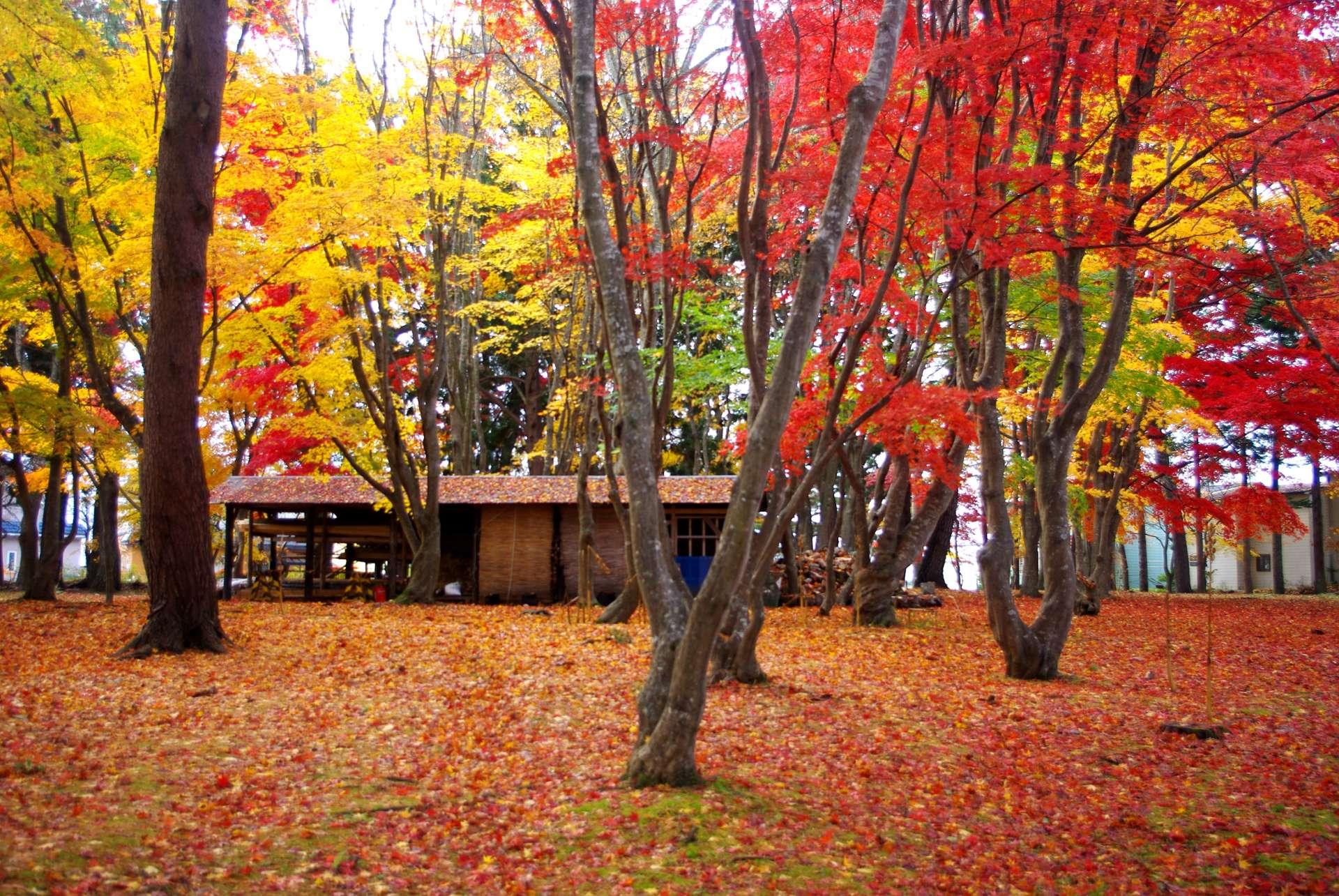 Red Foliage Garden
